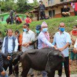 नमोबुद्धका किसानलाई अनुदानमा भैसी वितरण